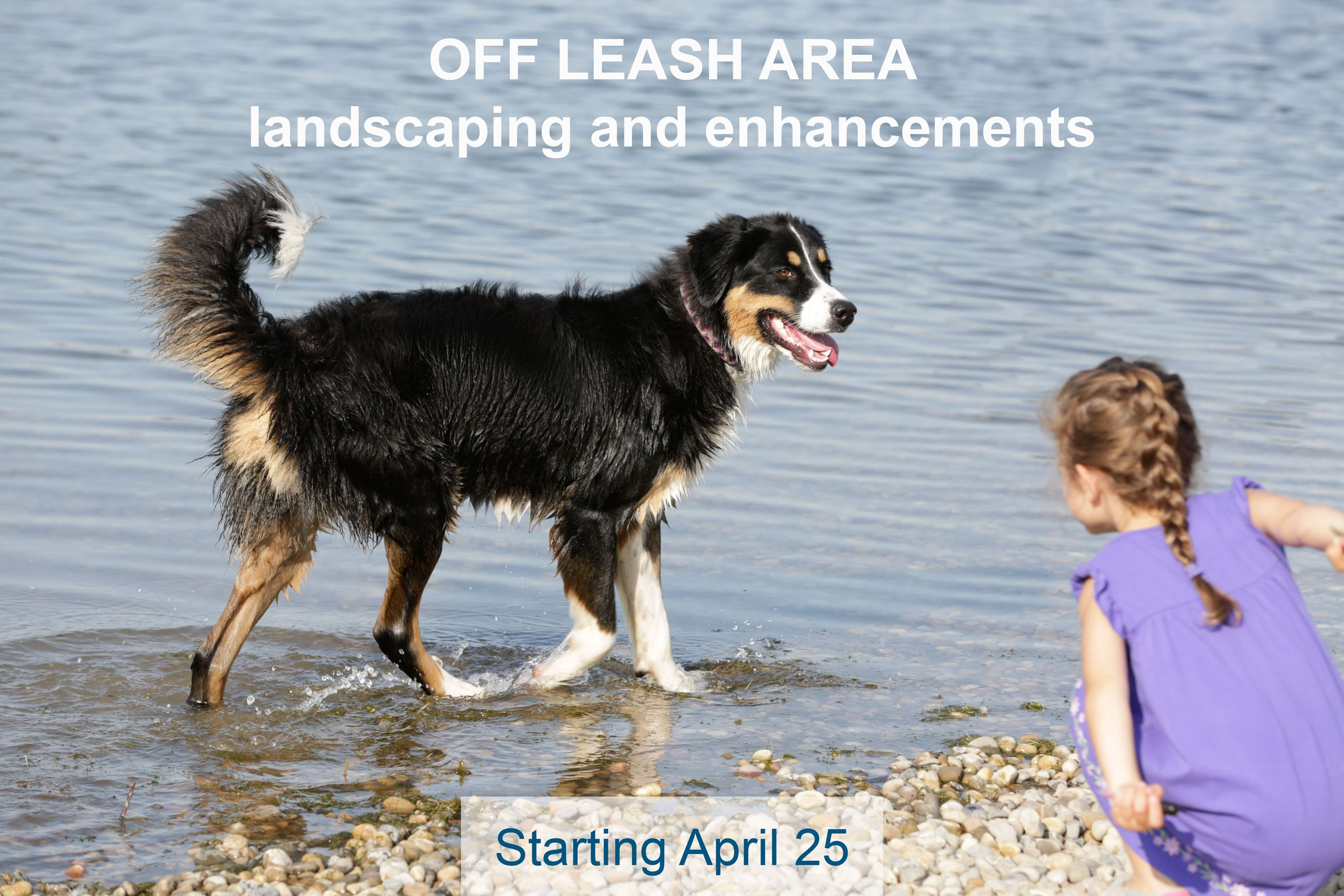 Off leash image