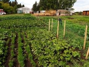 Chestermere's Rural Community Garden